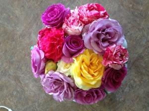Emily's roses